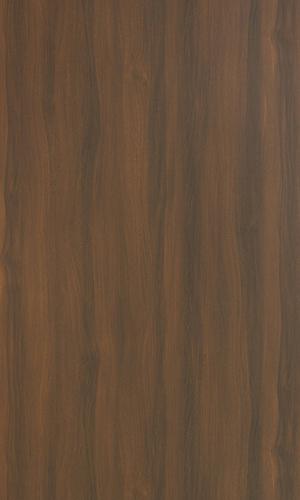 Caucasian Elm Light-15269